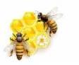 Bienenflüsterer.de